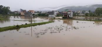 तीन दिनदेखि लगातार परिरहेको वर्षाका कारण रुपन्देहीको सैनामैना नगरपालिका–१ स्थित सोरौली दक्षिण क्षेत्र जलमग्न अवस्थामा । युवराज पाण्डे/रासस